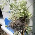 Houten Nestkastje voor Pindakaas pot, Nestkastje, thema, Grieks stijl  blauw-wit, Vogelhuisje bouwen, vogelhuisje pindakaas pot, huisje blauw-wit_9