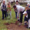 Pflanzung eines Ginkgobaumes auf dem Gelände Lebenshilfe e. V. in der Güstrower Nrdstadt.