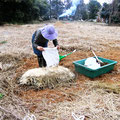 水はけの良い土の上に、大きな固まりを砕いた田土を高さ20〜30cmに広げ、米糠を被せます。