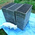 播き終わった苗箱は、積み重ねて、