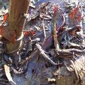 水路に溜まった落ち葉をジョレンですくい上げると、うじゃうじゃうごめいているゲンゴロウや、