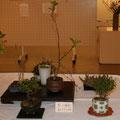 砂川ハルエ:愛しき植物