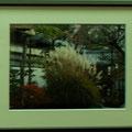 門田敏男:植物と景色⑦ 妙心寺