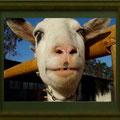 竹田辰興:動物達② ヤギのおじさん