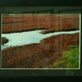 門田敏男:植物と景色④ サンゴ草