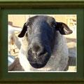 竹田辰興:動物達⑤ 緬羊のおばさん
