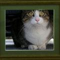 竹田辰興:動物達⑥ 水戸の猫