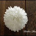K004丸菊*ホワイト