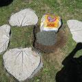 Nach dem Trocknen und Entfernen der Blätter kann verlegt werden