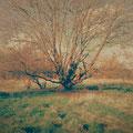 the hanging tree, salem (massachusetts)