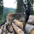 Bandit Bark vd Fpf