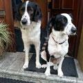 Shadow und Sunny - ein gemeinsames Zuhause in Deutschland gefunden