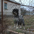 Бася - настоящий охранник.