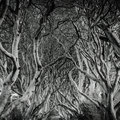 The Dark Hedges   Nordirland