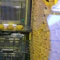 Schaukäserei in Appenzell: ein Roboter wendet die Käselaibe