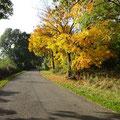 Natur bei Xanten: herbstliche Farben dominieren jetzt