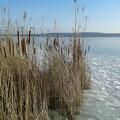 Winter am Schwielowsee