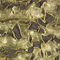 Camarosporium oreades imperfekte Art