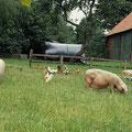Bauernhofidylle mit glücklichen Tieren