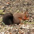 8 Wieder festen Boden unter den Füßen Eichhörnchen