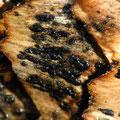 Phragmotrichum chailletii auf Fichtenzapfen