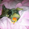 Sooo müde- Lucy 8 Wochen