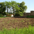Westseite des Burghofes vor der Gras-Aussaat