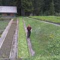 Pflanzgartenarbeiten mit der Sense