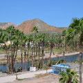 Die Palmen in der Lagune sehen auch ziemlich traurig aus.