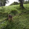 Sheeva ist eine tolle Hündin, wirft man ihr ein dünnes Stöckchen zu versucht sie einem, einen Baum zurück zu holen
