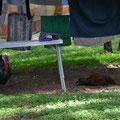 Die Hühner sind nicht tot sonder tiefenentspannt im Hühner-Spa