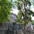 Estruktura II ist eine der größten Pyramiden auf Yucatán, Estruktura I ist die Größte und leider noch mit Bäumen bedeckt.