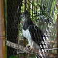 Das erste Mal eine Harpye gesehen.