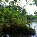 2. Lagune