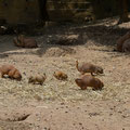 "Eindeutig ""Blacked Tailed Prairie Dogs"""