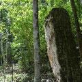 Calakmul ist bekannt für seine vielen Stelen, die eine Art Tagebuch der Stadt bzw. des Herrers waren.