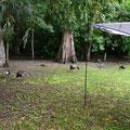 Morgens auf den Campingplatz werden wir umzingelt...