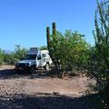Und das ist unser nächster wilder Übernachtungsplatz, irgendwo vor Santa Rosalita am nächtsten Morgen