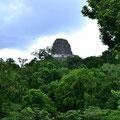 Blick auf Templo V, der im Dickicht versteckt ist