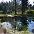Hat-Creek, hier durch einen Bieberdamm (rechts neben den Bäumen) gestaut, das Wasser ist glasklar