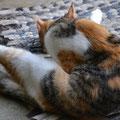 Katzen-Yoga?????