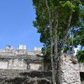 Calakmul, Große Akropolis