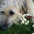 Chico genießt die Frühlingssonne