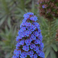 """La flore sur l'île de Paul Ricard """"Les Embiez"""""""