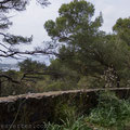 La nature luxuriante de Porquerolles