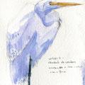 sophie Bataille - Oiseau - aquarelle