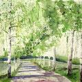 Birkenallee mit Wandergruppe 2016 45x61