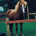 1995 im Garten auf Amrum