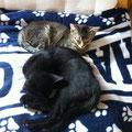 Merlin und Tinka