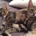 Chili und Cleo
